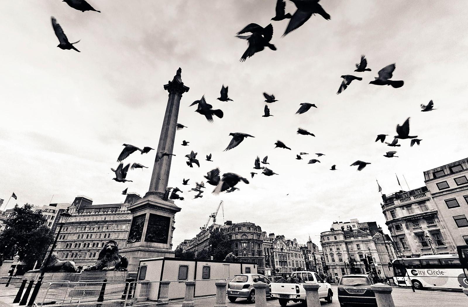 The Birds Trafalgar Square