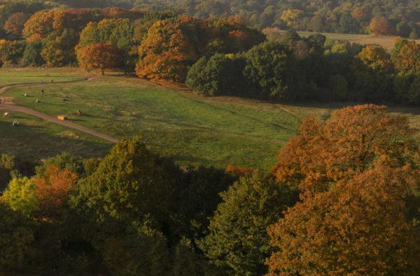 Hampstead Heath Aerial 360