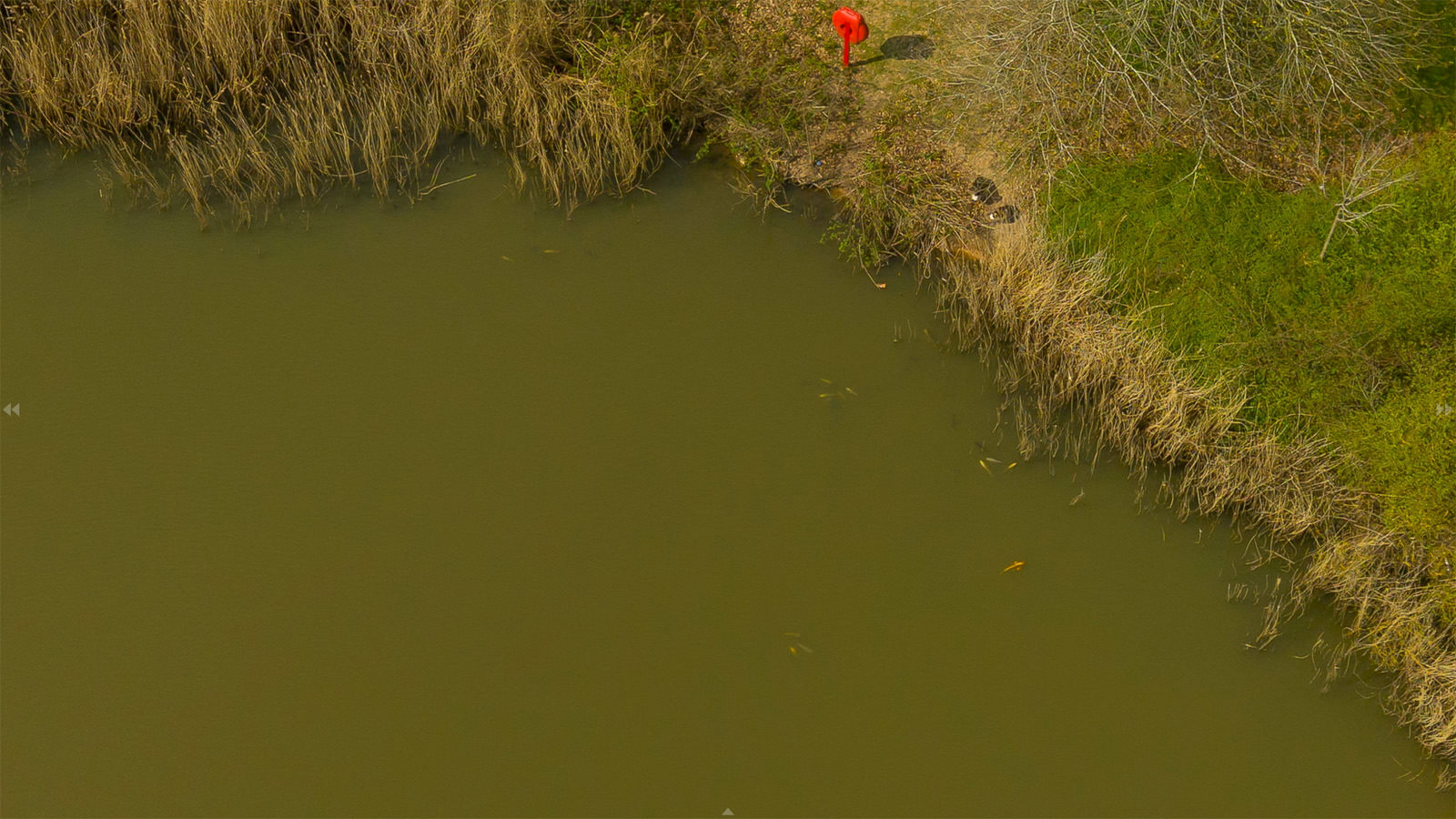 Still taken from the aerial virtual Tour - fish in pond